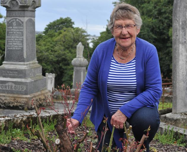 Heritage Roses Otago member Ann Williams shows a rose damaged by a mystery substance sprayed at Dunedin's Northern Cemetery last year. Photo by Christine O'Connor.