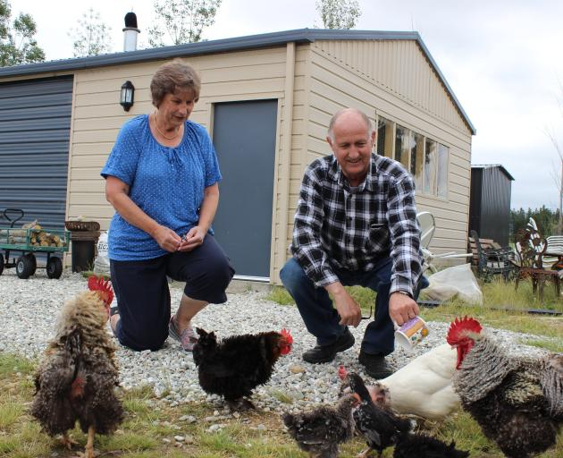 Lorraine and Steve Hawkins feed chickens on their property near Alexandra. Photo by Jono Edwards.