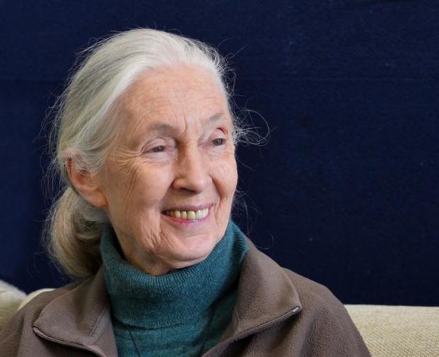 Dame Jane Goodall. Photos by Gerard O'Brien.