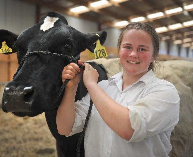Teegan Hall, of Waianiwa, shows off her best in show Holstein-Friesian cow at the Otago-Taieri A&P Show earlier this year. Photo: Christine O'Connor