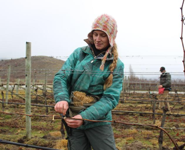 Viticulturist Brenda Stringer braves the rain to prune vines at a vineyard in Bendigo on Tuesday. Photo: Jono Edwards