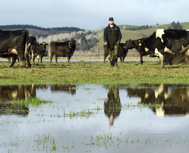 Taieri dairy farm worker Jessy Clark on the family's farm, which is almost all still under water....