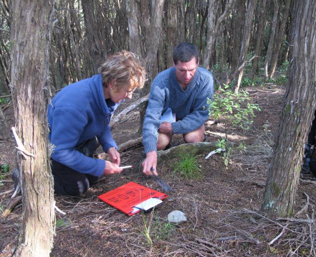 Volunteer Valerie Fay assists Kelvin Lloyd monitoring the growth of rare carex inopinata in a...