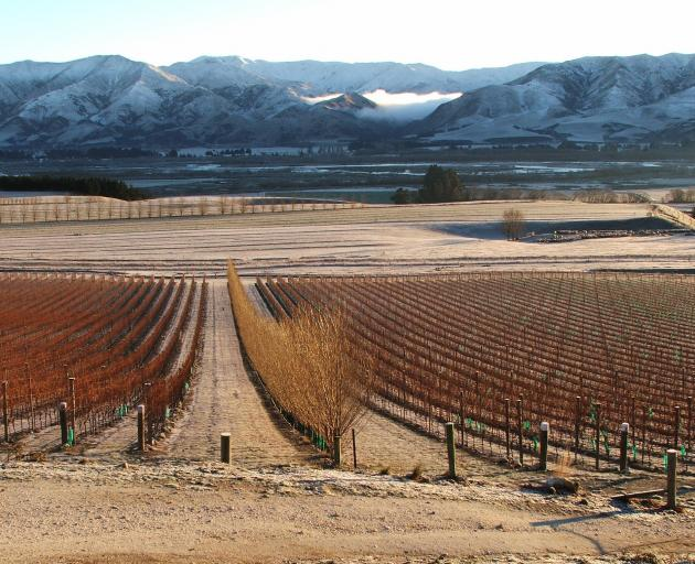 Ostler's is one of the vineyards contributing to the41ha of vines in the Waitaki Valley. Photo:...