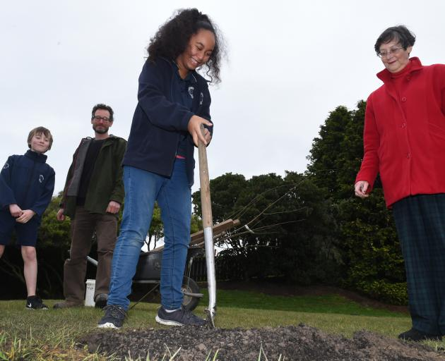 Carisbrook School pupil Myhani Vahua (12) digs a hole in which to plant a  Billington plum tree...