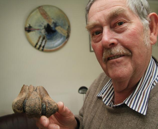David Harrowfield, of Oamaru, holds a moa leg bone, believed to be  about 650 years old, which he...