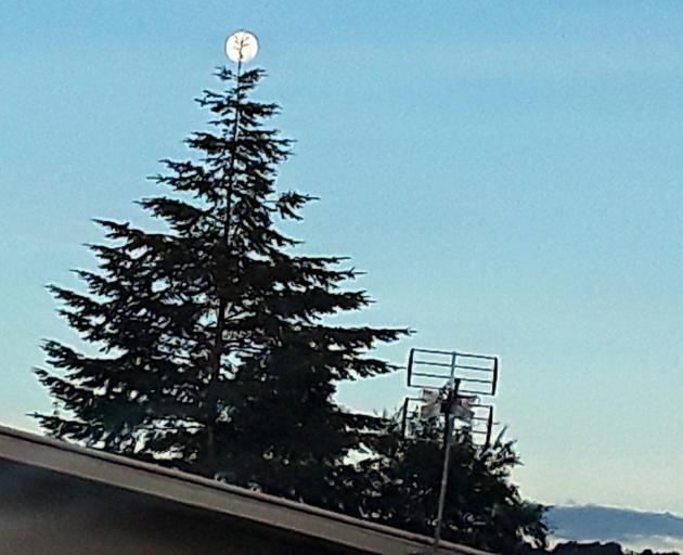 Tree Enduring Symbol Of Christmas Otago Daily Times Online News