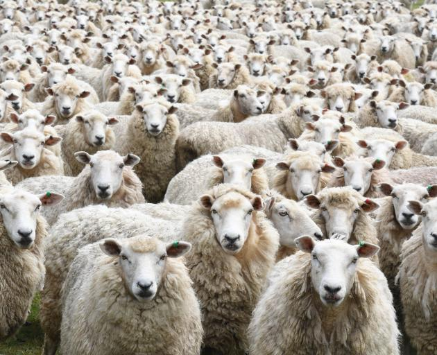 High lamb prices this year caught observers by surprise.