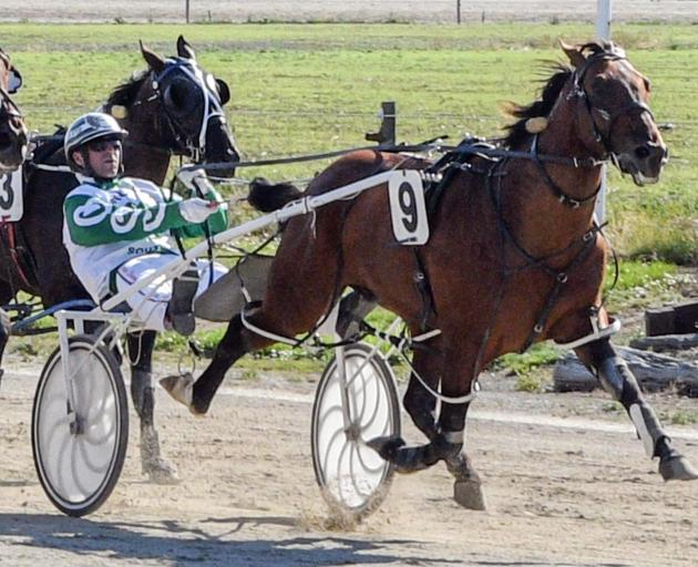 Royal Bengal and driver Dexter Dunn will attempt to repeat their Gore Cup success in today's Roxburgh Cup. Photo: Wild Range Photography
