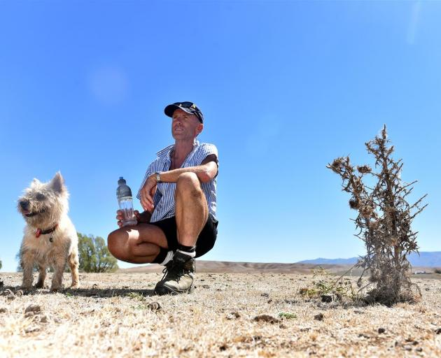 Donny Maclean surveys his dry Omakau farm, Bellfield, with his dog Hamish in the face of the persistently hot weather. Photo: Peter McIntosh