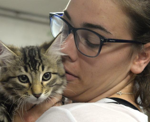 Dunedin PhD student Kate Fahey checks out one of the kittens on offer for adoption at the Animal...