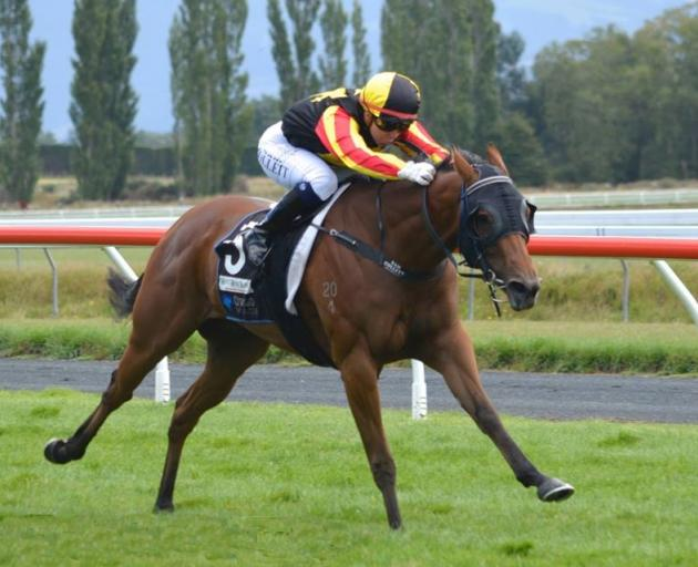 Excelleration and Samantha Collett win the listed Dunedin Guineas at Wingatui. Photo: JONNY TURNER