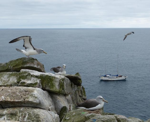 The Evohe at anchor under the gaze of Salvin's Albatross.