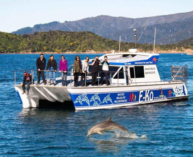 E-Ko Dolphin tours in the Marlborough Sounds. Photo: Russell Street
