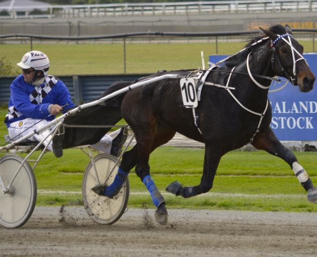 Dark Horse and trainer-driver Nathan Williamson are looking to cap their season with a win at...
