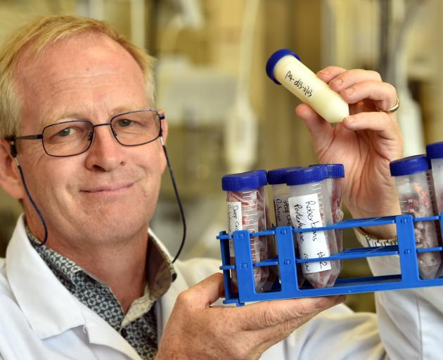 University of Otago Prof Russell Frew holds a milk sample, and a tray of meat samples. Photo: Peter McIntosh