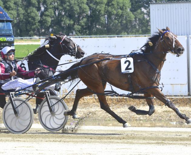 Tiger Thompson scores a career-best win in the group 3 Central Otago Cup for driver Matthew Williamson. Photo: Jonny Turner