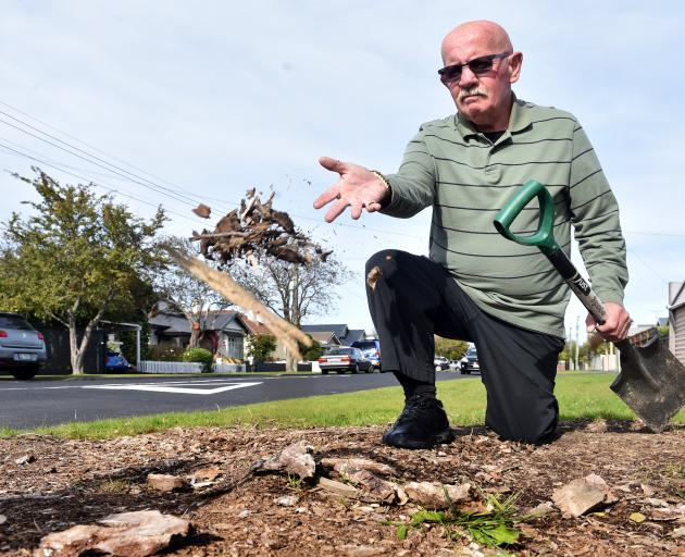 St Clair man Trevor Mattingly is unhappy the Dunedin City Council has failed to replace a tree...