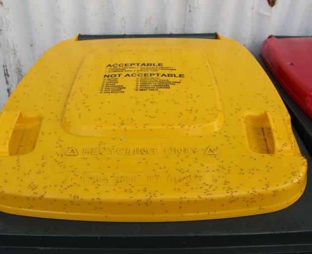Lloyd Pearson also compared aphid density on top of three wheelie-bin lids. The yellow, recycling...