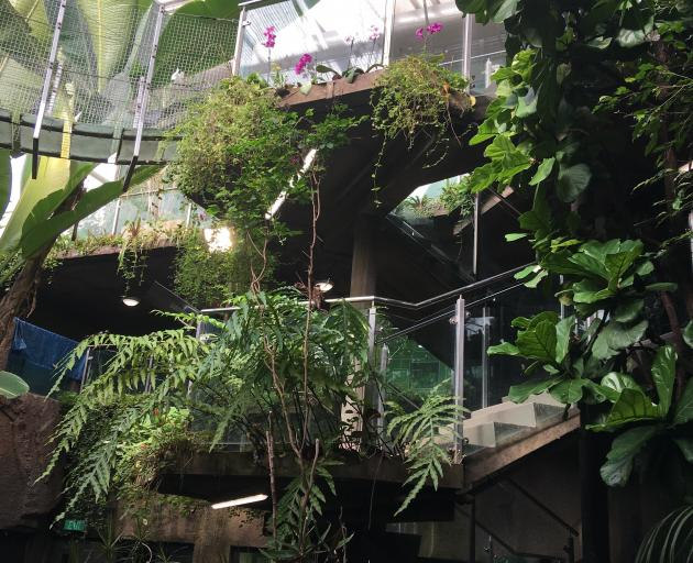 The Otago Museum butterfly house. Photo: ODT files