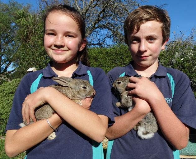 Glenavy School pupils Anna Mansfield (11) and Reuben Dann (11) with the school's pet rabbits, Thumper and Clover, that were stolen and then recovered recently. Photo: Daniel Birchfield