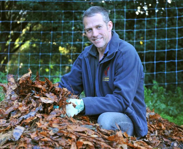 Dylan Norfield with one of the piles of raked leaves at Dunedin Botanic Graden. Photo: Christine...