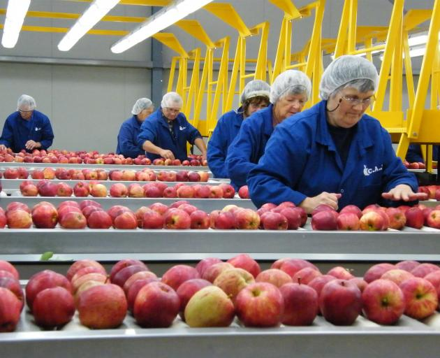 Workers at a packhouse in Ettrick process apples. Horticulture New Zealand is consulting on retention of the Commodity Levy Order and voting papers will be sent out early next month. Photo :Yvonne O'Hara