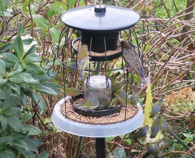 Gerard Oskam's home-made feeder in Bradford attracts many kinds of birds. A greenfinch and a...
