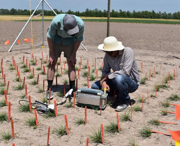 AgResearch scientist Dr Luke Cooney (left) and one of the United States scientists measure photosynthesis in the grass during a preliminary trial in the Midwest United States last year. Photo: Supplied