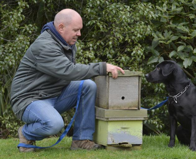 Rene Gloor with a new recruit, Cole, who is being trained to sniff out American foulbrood in bees. Photo: Gerard O'Brien