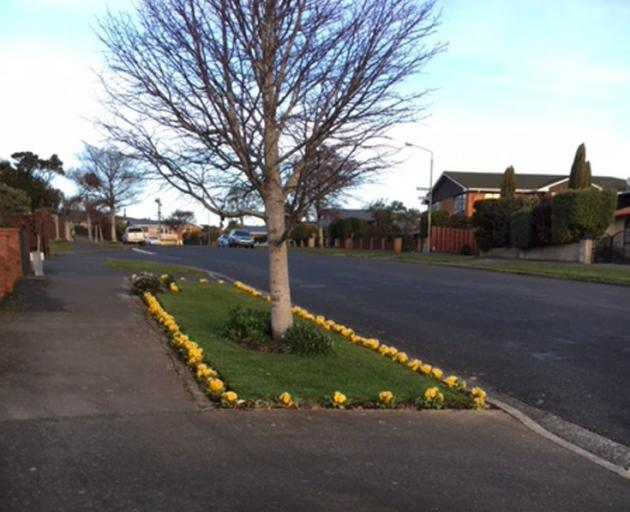 Some pretty neighbourhood gentrification on Larnach Rd, Waverley. Wouldn't it be nice if a few more residents across Otago brightened up their verges like this? A big green thumbs-up for this effort! Photo: Stephen Jaqueiry