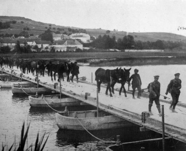 British transport mules and horses are led across a pontoon bridge on the Marne, France. - Otago Witness, 14.8.1918.