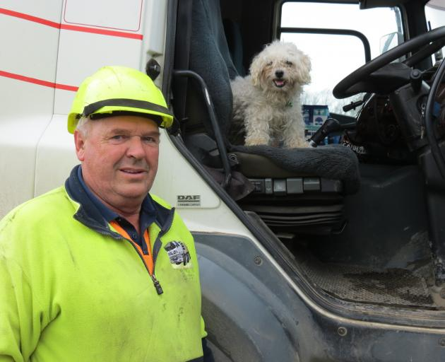 Logging truck driver Barry Scott, partner of Pam Bennett, says their 12-year-old Shih Tzu-Maltese cross dog Bailey has been trucking all his life. Mr Scott said Bailey rode with him all the time and was pretty relaxed about being on the road. He had a bed