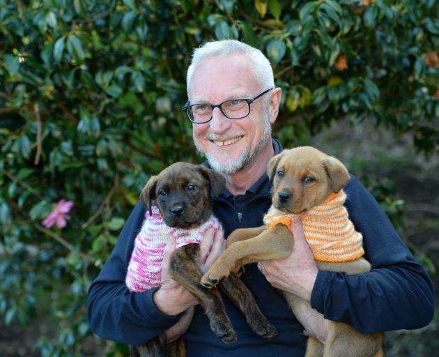 Bella (left) and Bentley, staffie cross puppies aged 10 weeks, show their appreciation to Jeff Herkt, director of animal welfare, at the SPCA centre in Dunedin this week. Photo: Linda Robertson