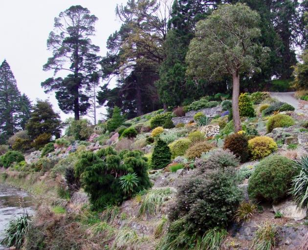 The rockery's splendid old lancewood (centre right) has had to be removed. Photo: Gillian Vine
