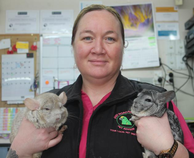 The shop's pet adviser Nikki Fewster holds the chinchillas Willow and Gizmo.  Photos: Sharon Reece