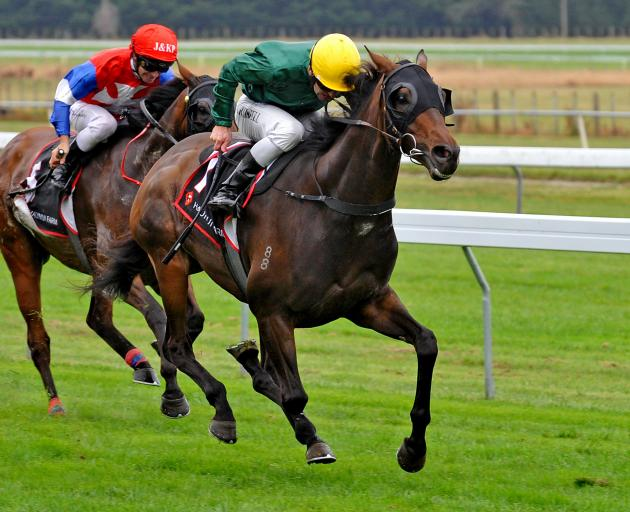 Durable galloper Nashville will attempt to reach $1million in career stake earnings when he...