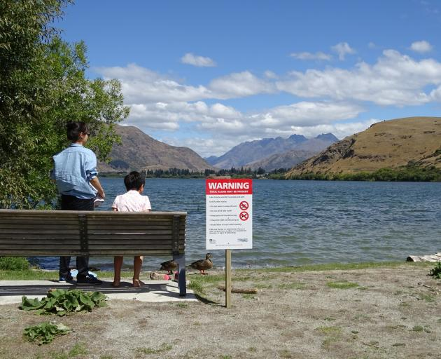 The Otago Regional Council put up signs around Lake Hayes in February advising against recreational swimming after cyanobacteria scums were found in the lake. They can be be harmful to humans and animals. Photo: Tracey Roxburgh