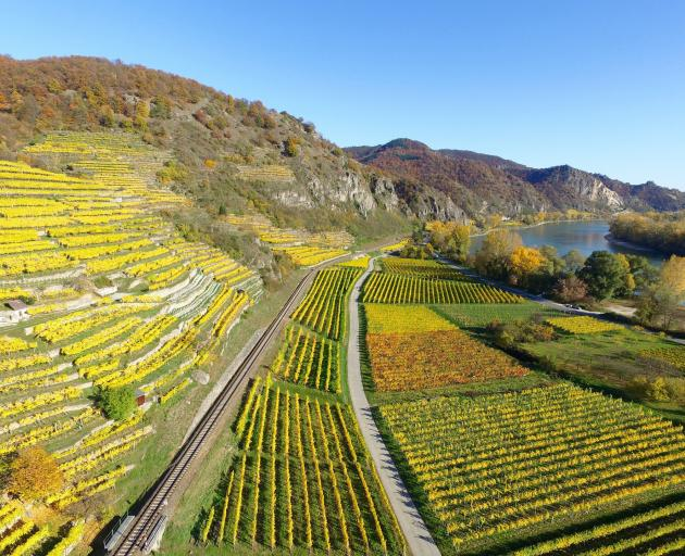 The wine terraces of the Rhine Gorge.