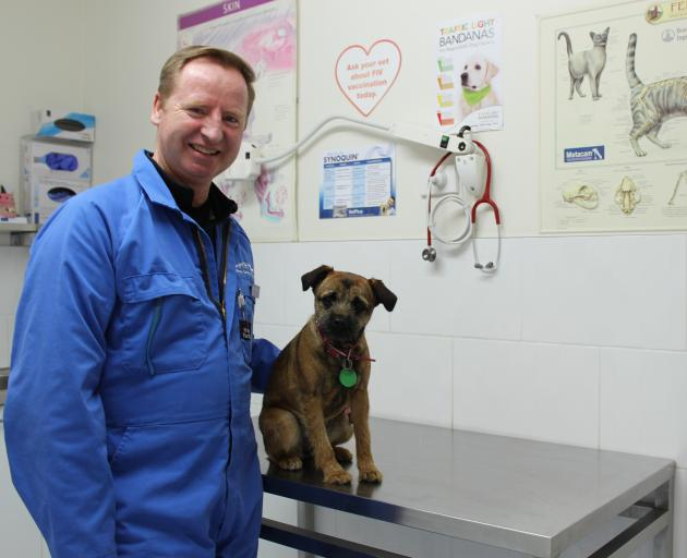 Murrays Veterinary Clinic in Mosgiel head veterinarian Donald Murray checks out Twig. Dr Murray said working on the Taieri involved working with animals of all shapes and sizes and in different circumstances. Photo: Ella Stokes
