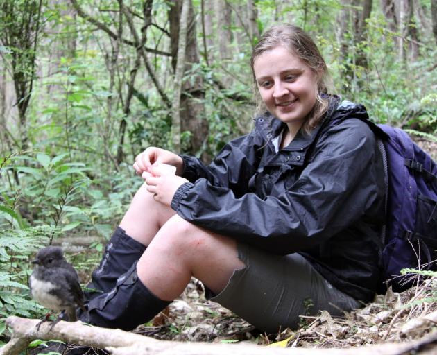 Dr Romana Salis with a banded male South Island robin at Orokonui during an earlier stage of the...