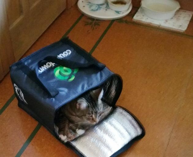Pam Robertson of Broad Bay's SPCA rescue cat Ana likes boxes and bags, including the insulated...