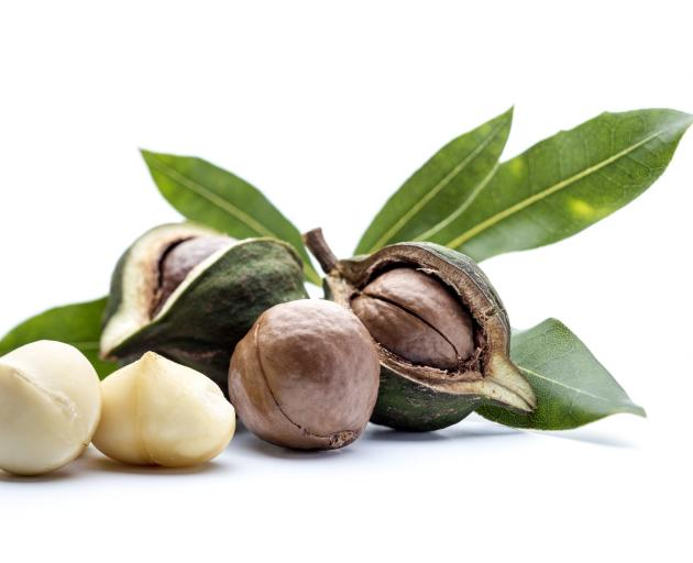 Macadamia nuts. Photo: Getty Images