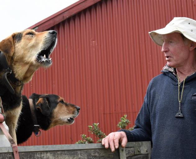 Taieri farmer Graham White with huntaways Tuff (left) and Scoot. PHOTO: STEPHEN JAQUIERY