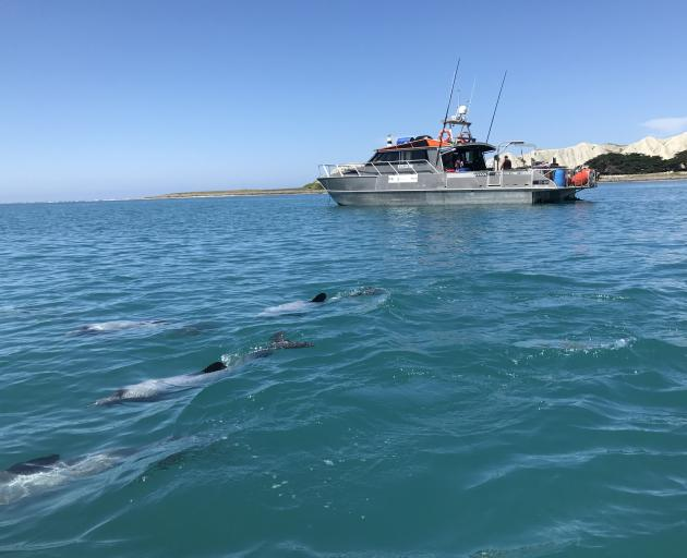Dolphins investigate while the survey crew collect seabed data. Photo: Sharon Reece