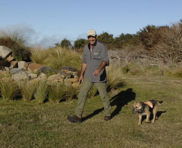 Department of Conservation's Scott Theobald and his terrier Crete check Dunedin's Orokonui Ecosanctuary for stoats in 2012. Photo: ODT