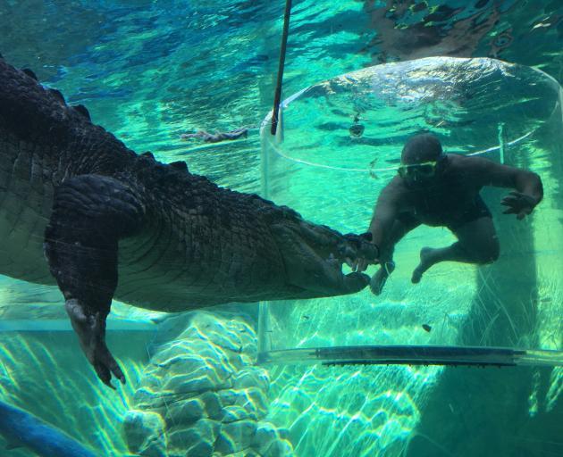 Nuno Vilela, of Alexandra, meets a croc through a perspex screen at Crocosaurus Cove, in Darwin....