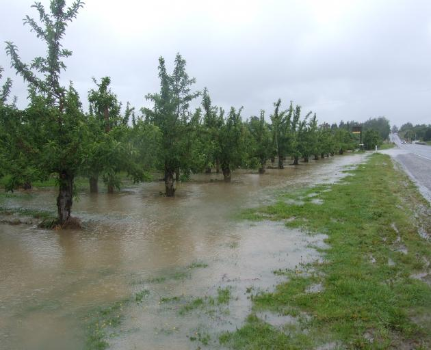 A Roxburgh orchard yesterday morning
