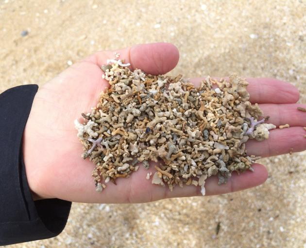 从一个泥灰质的海滩的珊瑚沙子在Connemara。