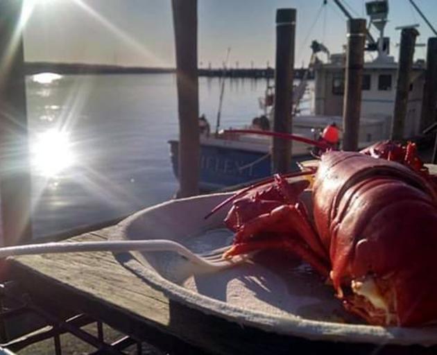 A freshly-caught lobster. Photo: Gwyneth Hyndman